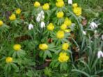 Spring at Batchcott