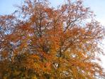 Autumnal colours