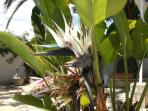 Interesting plants in garden.Lemons,figs ,oranges,grapes,almonds ,pomegranates,nispero.