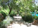 A shady garden path with a glimpse of the pool