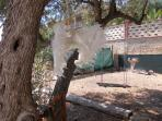Ali sull'albero di ulivo