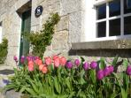 Tulips at The Old Rectory Apartments