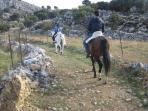 Rutas a caballo y clases de equitacion