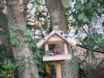 Gli uccellini che vivono in giardino trovano sempre cibo e acqua fresca