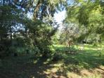 Il verde del nostro giardino