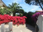 ingresso vialetto e giardino