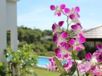 Beautiful gardens with Thai orchids
