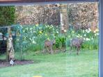 Roe deer are seen in and around Squirrel Cottage. More often late winter and early spring.