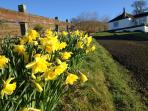Springtime at Kestrel cottage