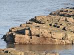 Local rock formations off Beadnell Point, great for rock pooling