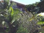 Le jardin tropical au pied de la résidence