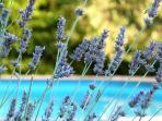 Lavander and swimming pool