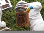 Rookery Barn Bees - Our first summer extraction 2012 we sold out of honey by September..