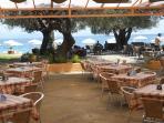 The Shea Shells Taverna/ Snack Bar