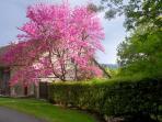 Springtime at La Jacquotte