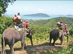 Elephant trekking is something a must try in Kata Beach !!