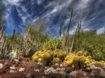 The Phoenix Desert Botanical Garden is only a few minutes away