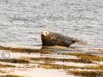 Seal sunning itself on the Drummore beach near Clashwhannon in Luce Bay, wee beauty!