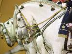 Horse display in Jerez