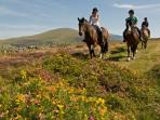 Horse riding in Snowdonia
