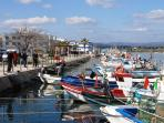 Colorful fishing boats in Fuseta - enjoy fresh seafood every day!