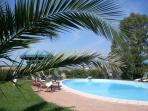 Swimming pool and surrounding vegetation