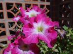 Las flores de los meses de julio y agosto