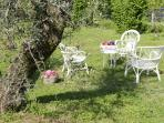 dolce far niente under the old olive tree