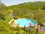 Enjoy a refreshing swim in the pool surrounded by olive trees