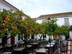 The orange trees at the local restaurant