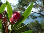 flowers fo Alcudia,Mallorca