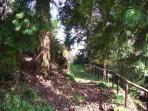 A garden path.