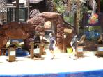 Sea lion show at Oasis Zoo