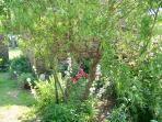 Des fleurs dans le jardinet