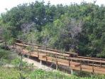 A rustic wooden bridge winds through the sub-tropical bush for a short walk to the beach.