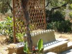 Just outside the second bedroom a trellis gives  shade with the climber behind it growing fast