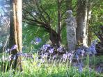 Pan among the bluebells
