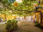 Vine tree covered patio