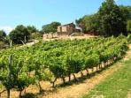 Casa Lisa overlooking vineyard of Sangiovese grapes