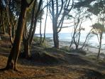The woodland park leads onto the beach