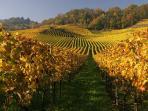 Vineyard-Path Mont Vully
