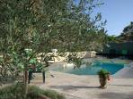 jardin et piscine vus de la maison