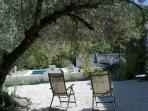 Relax with a book under the olive tree.