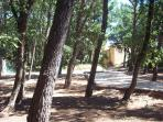 The well shaded boules playing field