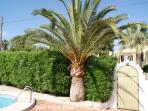 Best Palm Tree!!