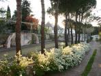 Viale dei biancospini in fiore