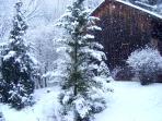 Snowing in the Garden