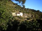 The finca seen from our private drive through the olive terraces