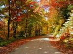 Beautiful fall foliage!