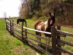 Horse love!